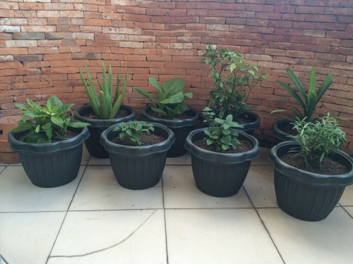Our new herb garden