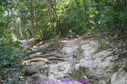 A defined, rocky trail