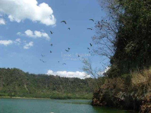 The boat's motor scared the birds staying in the island, causing them to fly away.