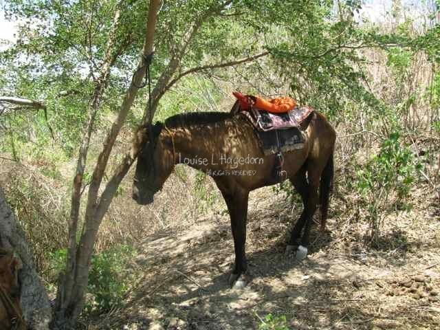 Reggie's horse